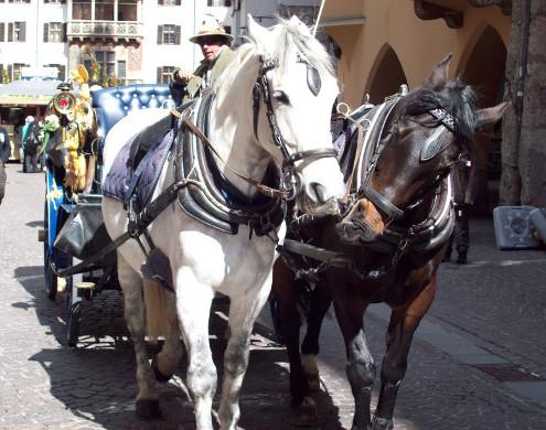 Adventreise Pferdekutsche Innsbruck